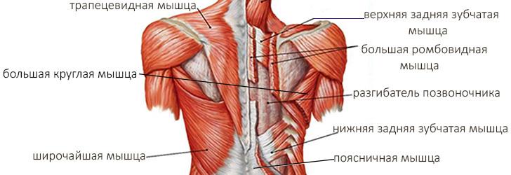 Изолирующие упражнения для спины на тренажере